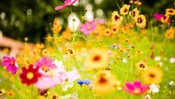 Le fioriere devono essere rimosse se il regolamento condominiale le vieta