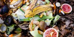 La lotta allo spreco alimentare tra legalità e buon senso