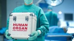 Il nuovo reato di traffico di organi prelevati da persone viventi