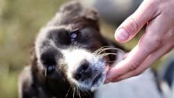 Se ti avvicini a un cane per accarezzarlo e questo ti morde il risarcimento non ti spetta