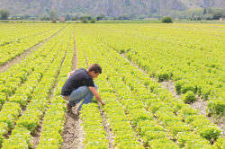 Successione agraria: rivoluzionaria sentenza del Tribunale di Avellino