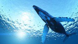 Balena blu: è istigazione al suicidio?