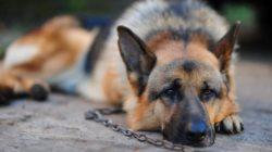 La responsabilità del proprietario di animali domestici
