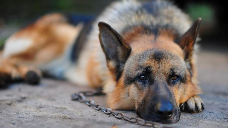 La responsabilit del proprietario di animali domestici for Rivista di programmi domestici