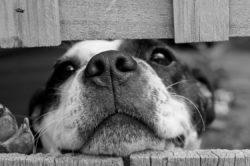 Il divieto di animali domestici in condominio