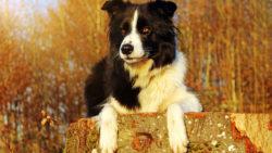 Circolazione stradale: sì al risarcimento per il padrone del cane investito