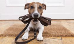 Animali: cane morde un passante, responsabile la dogsitter