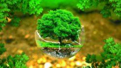Obblighi di bonifica e responsabilità per danno ambientale
